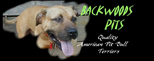 Backwoods Pits Top  Quality American Pit Bull Terriers