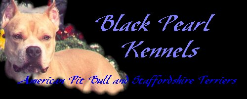 Black Pearl Kennel APBT's and AmStaffs