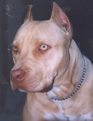 Pitbull and Amstaff Page