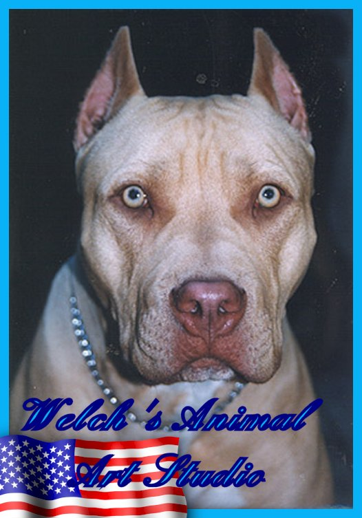 Pit Bull Max owned by Caragan Kennels