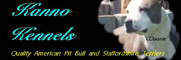 Kanno Kennels American Pit Bull Terriers,American Staffordshire Terriers  and English Bulldogs