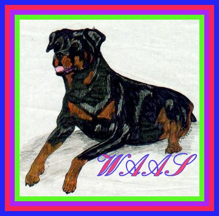 Rottweiler colored pencil/ink not for sale
